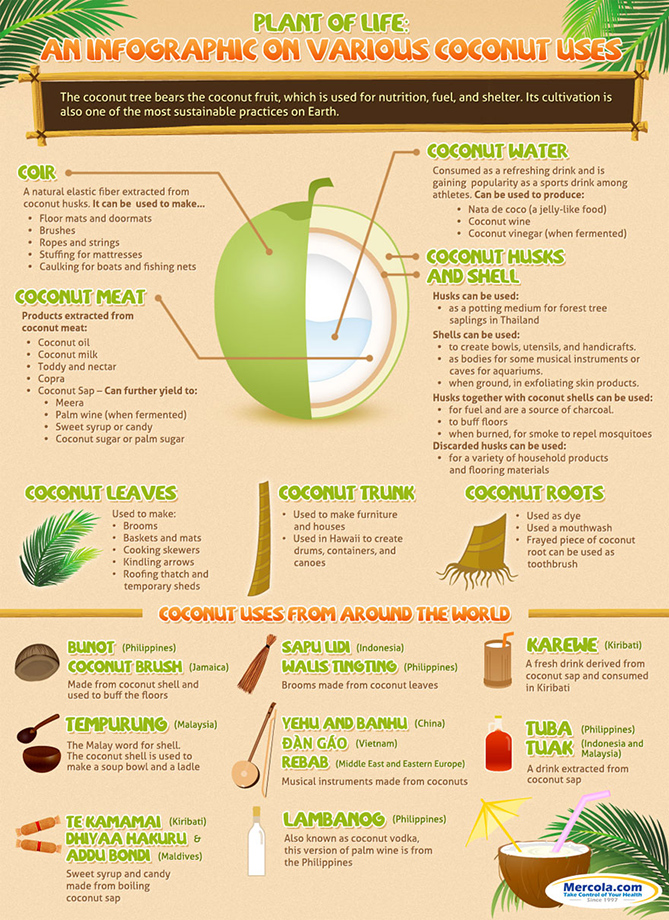 Interesting facts about coconut