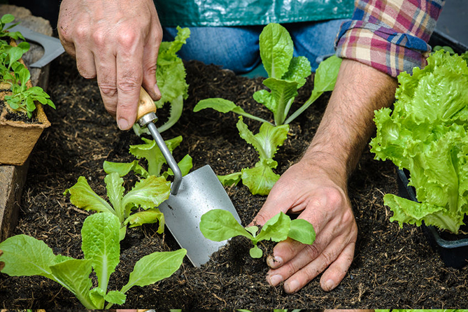 How to Start Your Own Organic Garden at Home