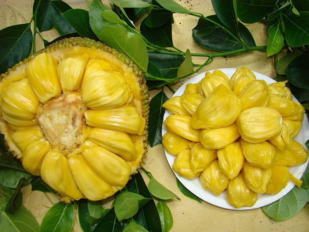 Weird fruit - Jackfruit