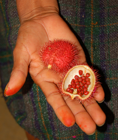 Weird fruit Achiote