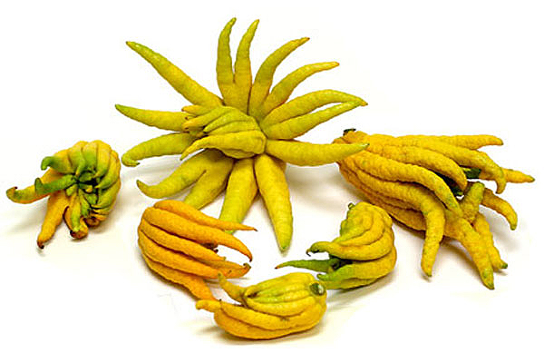 Weird fruit - Buddhas hand - Fingered citron