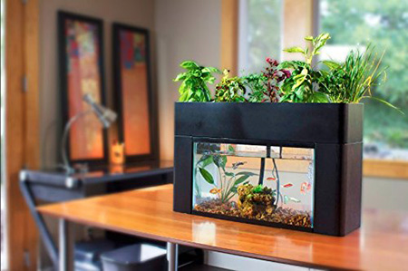 AquaSprouts Herb Grower On Countertop