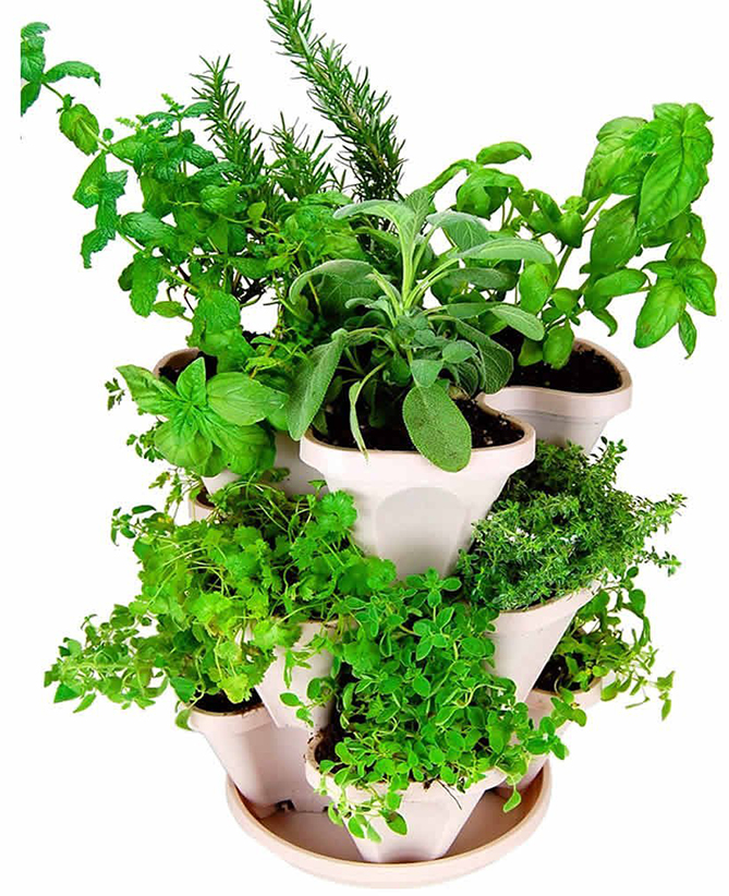 Self-watering Indoor-Outdoor Herb Planter