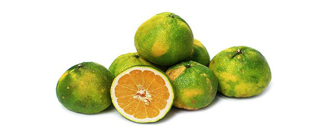 Weird fruit - Ugli fruit