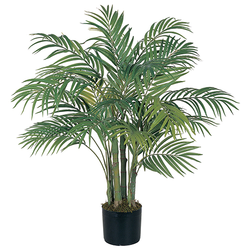 Air purifying plant - Areca Palm