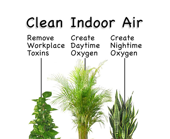 Clean Indoor Air