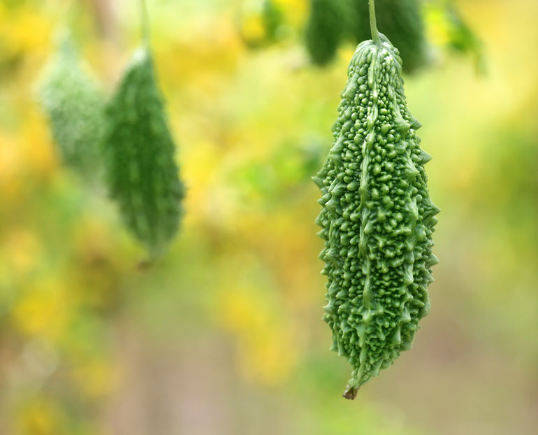 What is Karela and What Are Its Health Benefits