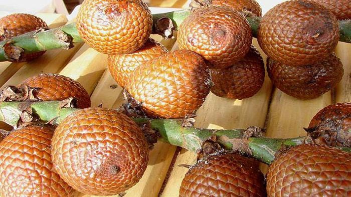 World's Weirdest Fruits - Aguaje1
