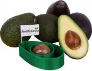 AvoSeedo - the Avocado Grower