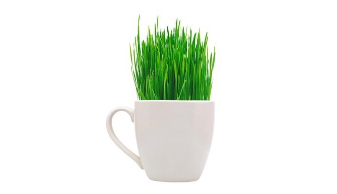 Why Add Wheatgrass to Your Juice and Smoothie Recipes