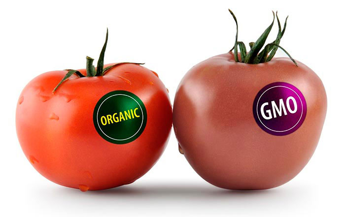 Organic food is better than GMO food1