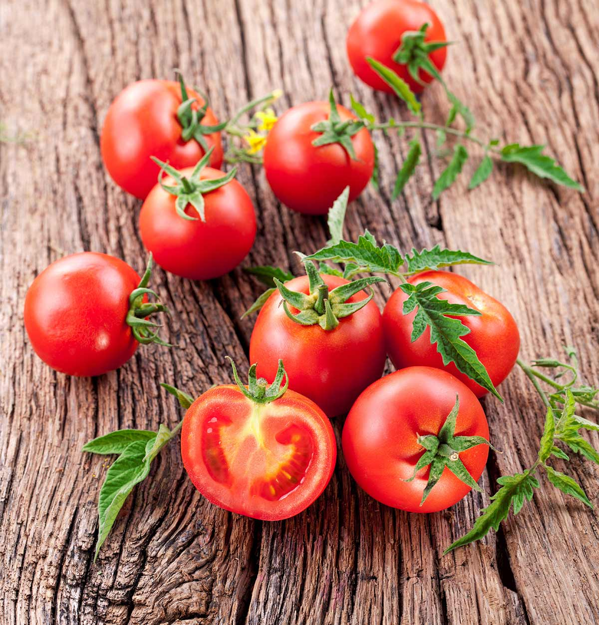 Organic Tomatoes for Juice1