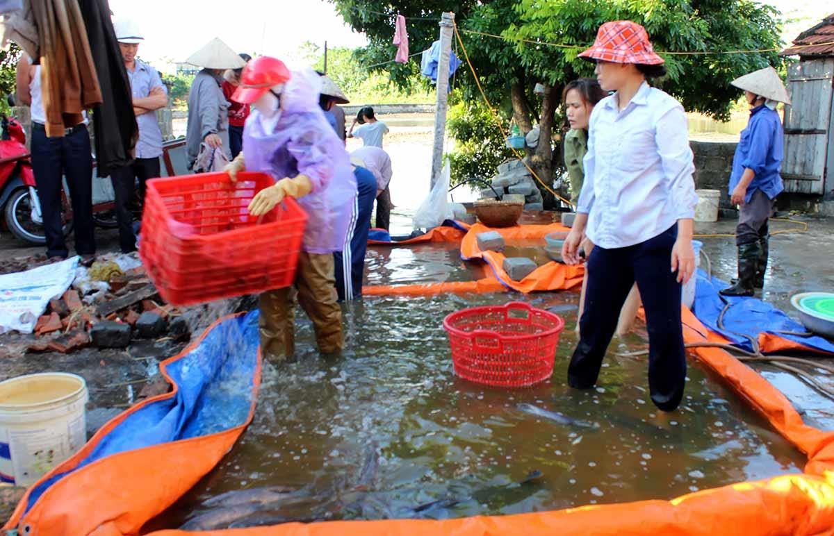 Viatnamese Fish Farms1