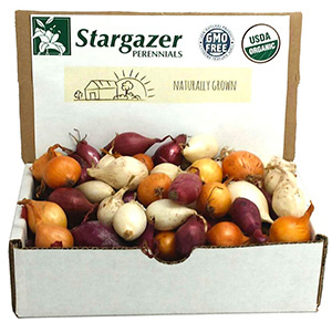 Organic Onion Mix by Stargazer Perennials