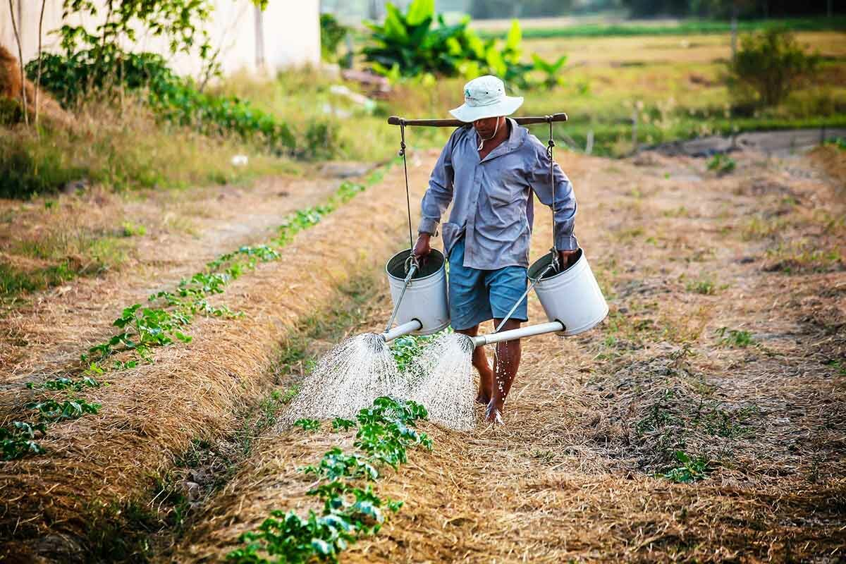 Organic Agriculture - Benefits Future Opportunities And Challenges