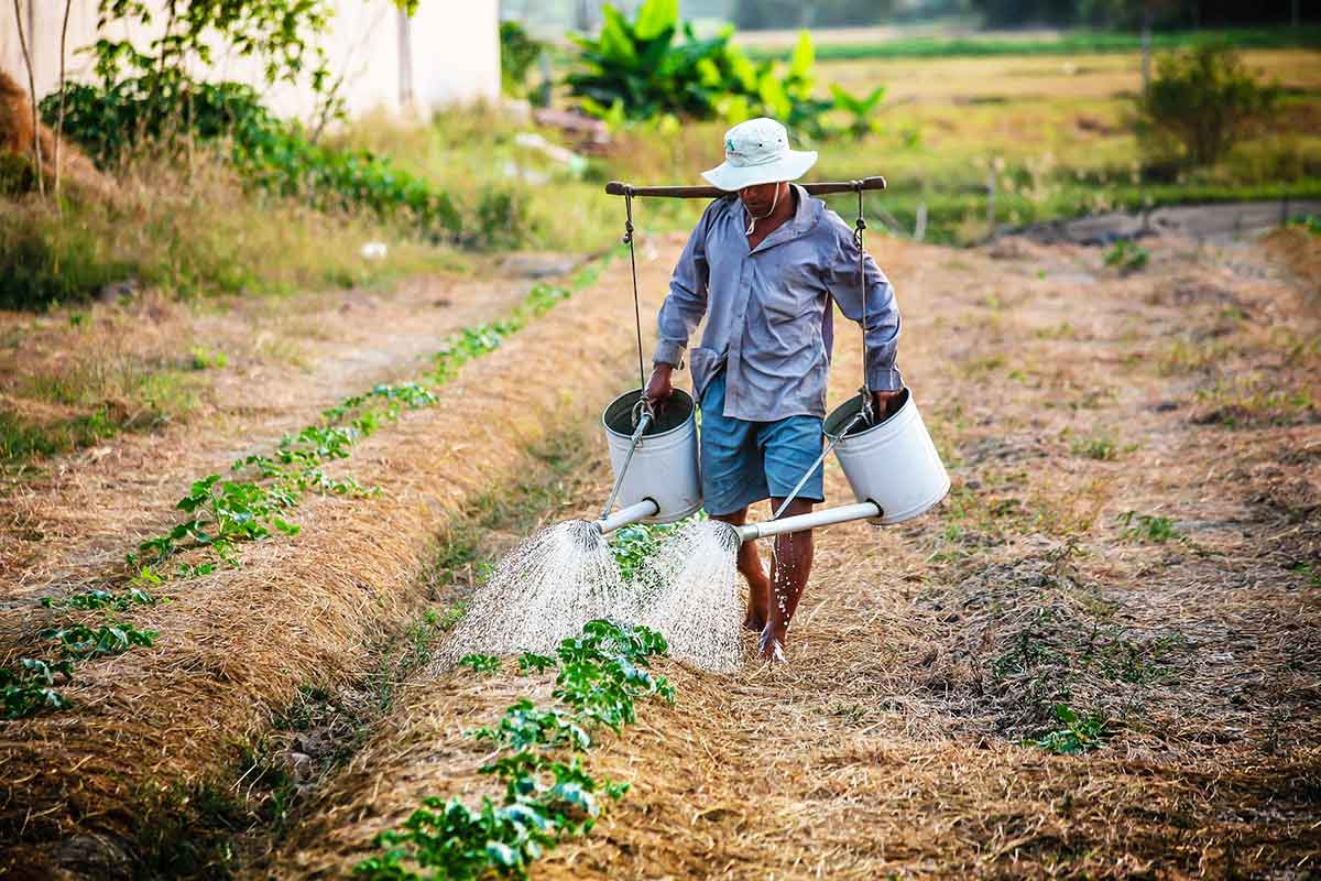 organic agriculture Organic agriculture is practiced in 172 countries, and 437 million hectares of agricultural land are managed organically by approximately 23 million farmers.