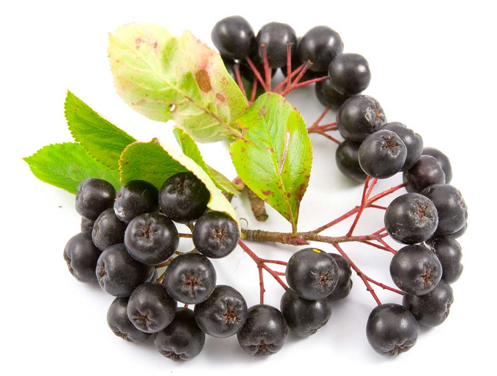 Best Aronia Berry Powder Supplements_