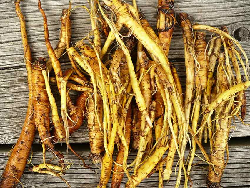 Best Liver Cleansing Herbs - Yellow Dock Root