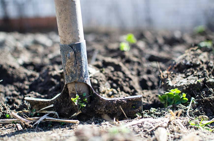Benefits of Natural Weed Control for Home