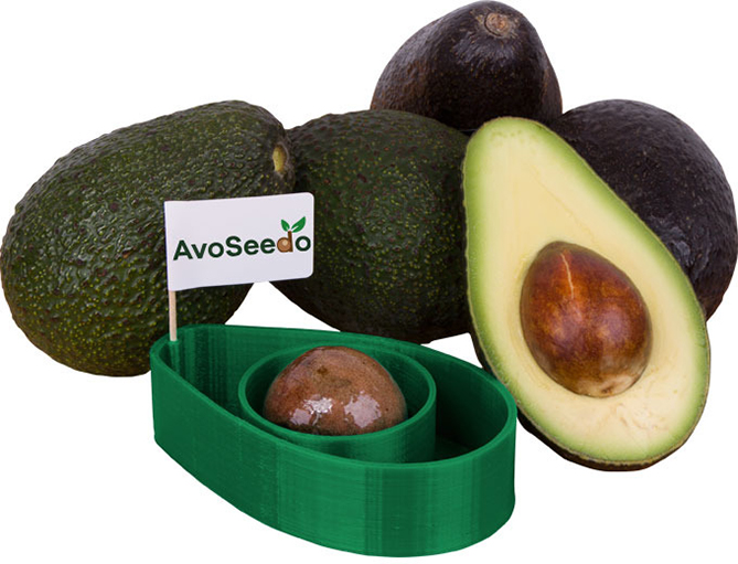 Growing Avocados At Home With AvoSeedo - the Avocado Grower!