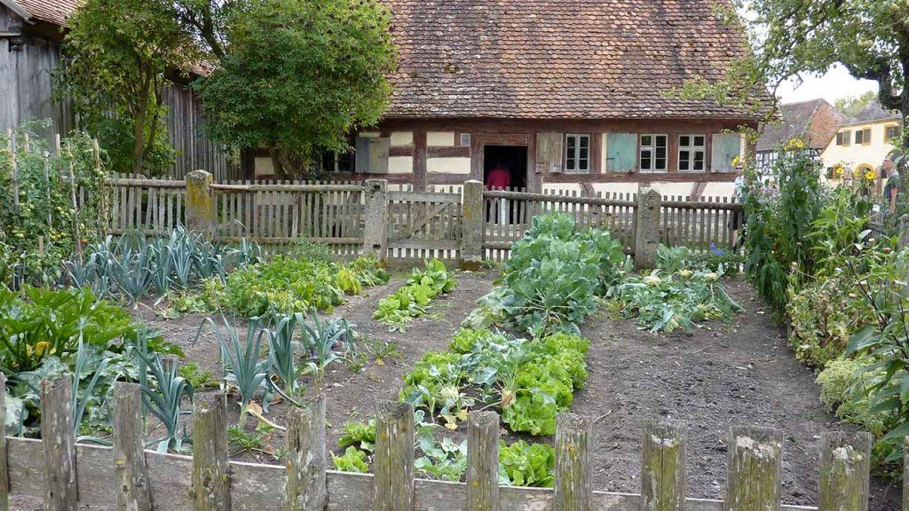 Micro-farms and Their Impact on Our Food Supply