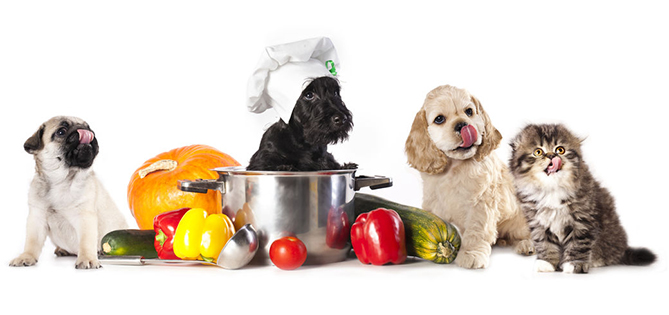 Organic Pet Food: A Good Choice for Everyone