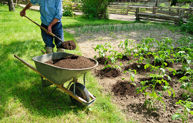 Organic foods and organic farming: How did we come to the idea and turned it into a lifestyle?