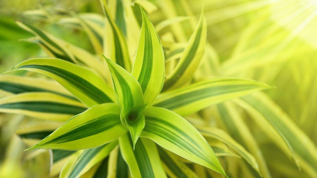 Which Are the Plants in Your Room That Promote Better Sleep?