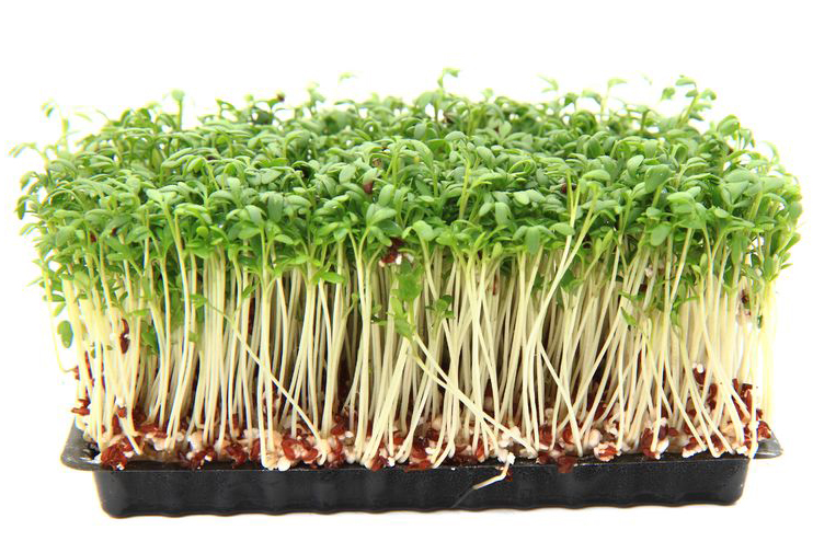 Sprouting at Home and the Health Benefits of Eating Sprouts