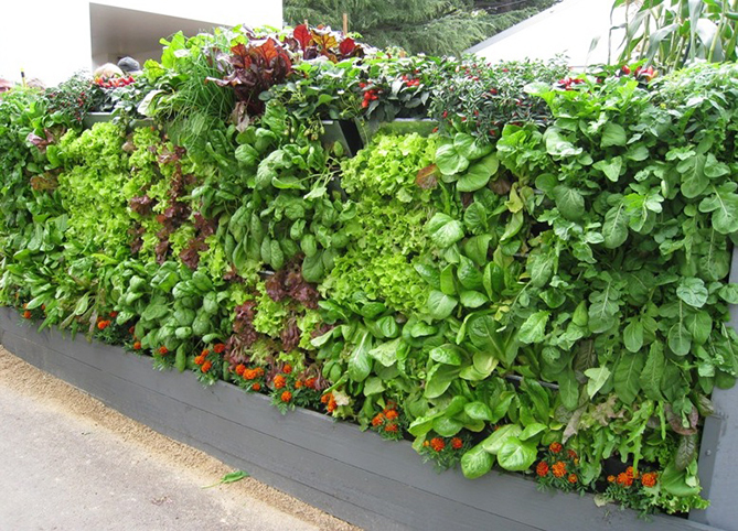 5 Advantages of Vertical Gardens